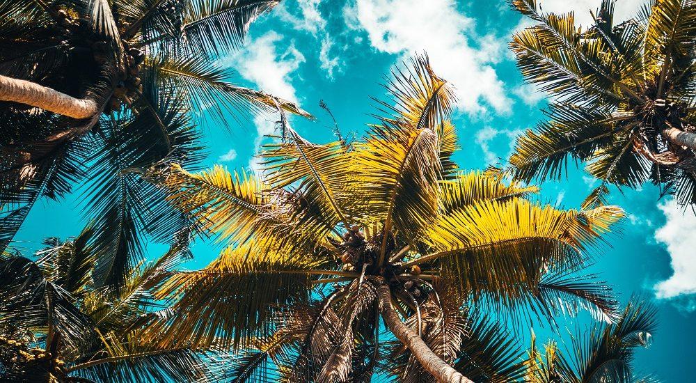 palmy na tle nieba | handover przed urlopem